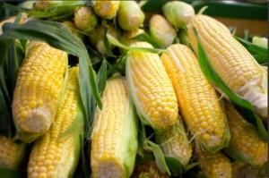 Ears-of-corn